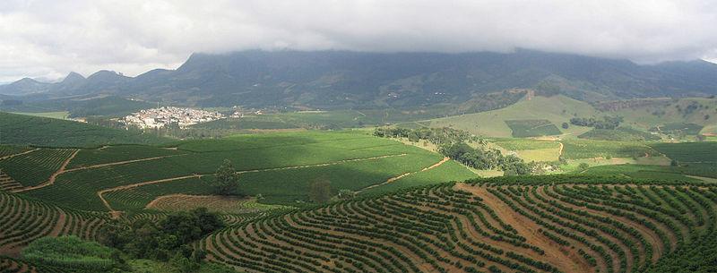 800px-Coffee_Plantation.jpg