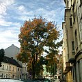 Colourful Nordstadt In Autumn (88184435).jpeg