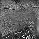 Columbia Glacier, Valley Glacier Moraines, August 24, 1964 (GLACIERS 1076).jpg