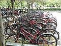 Common bicycles in Infosys Mysore (3).JPG