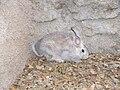 Conejo1.jpg