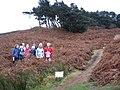 Coniferous Trees on Ilkley Moor - geograph.org.uk - 620741.jpg