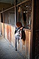 Copped Hall Stables and saddle, Epping, Essex, England.jpg
