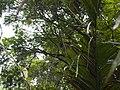 CostaRica (6108920538).jpg