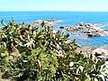 Costa Brava bei Calella de Palafrugell, Katalonien (Spanien).jpg