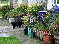 Cottage cat with flowers - geograph.org.uk - 1474568.jpg