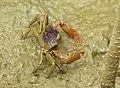 Crab 0648.jpg