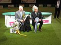 Crufts dog show 2011 (8652872024).jpg