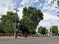 Curico, plaza en Av Freire (16984181325).jpg