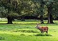 Dülmen, Wildpark -- 2011 -- 2185.jpg