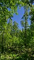 Düvels Kamp (NSG-HA 152) 03.jpg