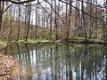 D-BW-Tettnang - Tettnanger Wald.JPG