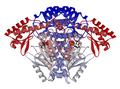 DOPA decarboxylase dimer 1JS3.png