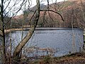 Dalshinnie Loch, Mabie Forest - geograph.org.uk - 142765.jpg
