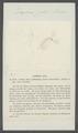 Daphnia pulex - - Print - Iconographia Zoologica - Special Collections University of Amsterdam - UBAINV0274 099 06 0003.tif