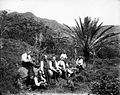 Date Palm, Manoa Valley (1), photograph by Brother Bertram.jpg