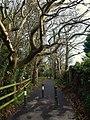Dawlish Bridleway 5 - geograph.org.uk - 1080667.jpg
