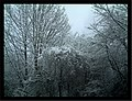 Daystar Frost Colors Glottertal - Mythos Black Forest Photography - panoramio (21).jpg