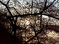 Deer Park Sun and Branches.jpg