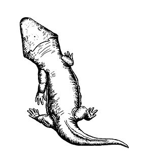 Description de l'image Deltasaurus kimberleyensis.jpg.