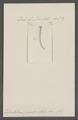 Dentalium pseudoentalis - - Print - Iconographia Zoologica - Special Collections University of Amsterdam - UBAINV0274 081 10 0028.tif