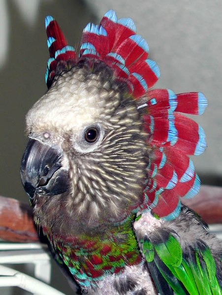 What is my Parrot Saying? - Growls, Clicks and Other Noises