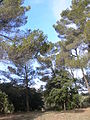 Domaine des Treilles (Var) 23.JPG
