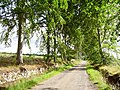Drumsmittal Lane - geograph.org.uk - 207863.jpg