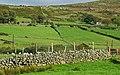 Drystone wall near Fofanny Dam - geograph.org.uk - 971689.jpg