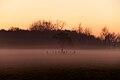 Duivelshof mist.jpg