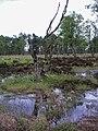 Duvenstedter brook madenpohl 2.jpg