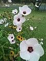 Dville Flower gardens.jpg