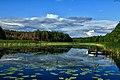Dzika natura - panoramio.jpg