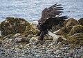 Eagle FA 133 (26693444706).jpg