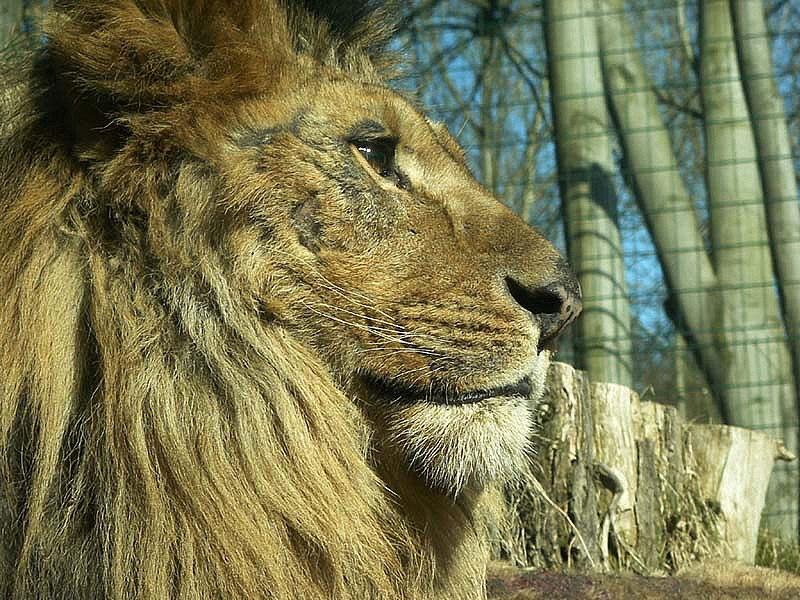 Fasciculus:Eberswalde zoo 014.jpg