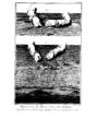 Encyclopedie volume 8-260.png