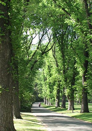 Parks and gardens of Melbourne - An avenue of English Elms in Fitzroy Gardens