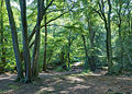 Epping Forest Centenary Walk 2 - Sept 2008.jpg
