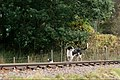 Eskdale and Ennerdale Foxhounds (30374509123).jpg