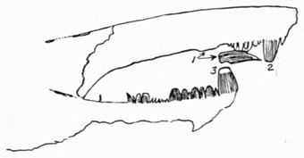 Eurypterids of the Devonian Holland Quarry Shale of Ohio figure 35.jpg