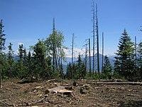 Exploitation forestiere.JPG