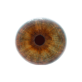 Eyeball.png