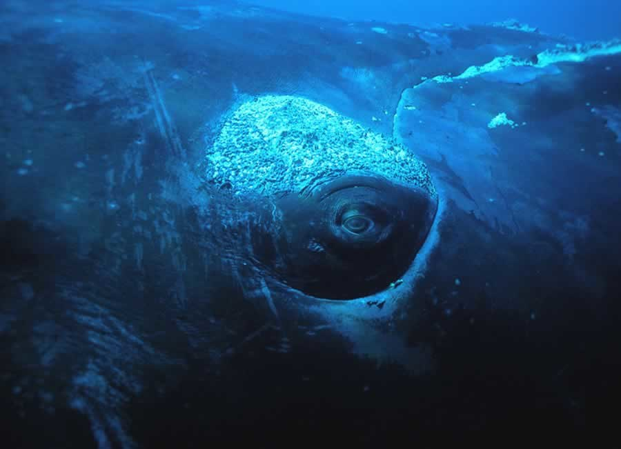 Face to face with the whale under water - panoramio