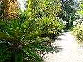Fale - Giardini Botanici Hanbury in Ventimiglia - 646.jpg