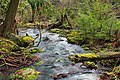Fall Creek (Revisited) (24) (11660023586).jpg