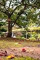 Fallen Cherries (32104601528).jpg