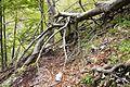 Fallen tree on trail.jpg
