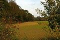 Farmland and Fan Wood - geograph.org.uk - 273221.jpg