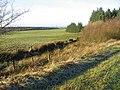 Farmland by Auchter Water - geograph.org.uk - 294895.jpg