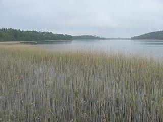 Feisnecksee lake